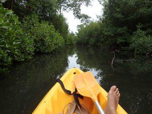 Dès le début de la randonnée, le calme de la mangrove force l'attention. Objectif : apercevoir ce je ne sais quoi.
